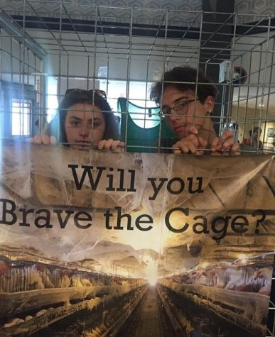 Will You Brave The Cage? Photo provided by Simon Brown.