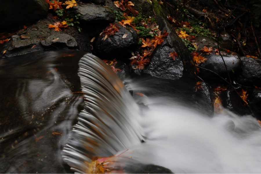 Cleveland students enjoy the fall foliage and colors in the Gorge and Reed College in October.