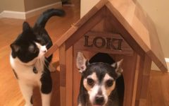 Lucky Loki Gets a House