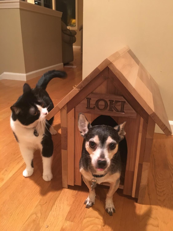 Fi Fi (cat) and Loki (dog) with the dog house. Photo provided by Ayesha Freeman.