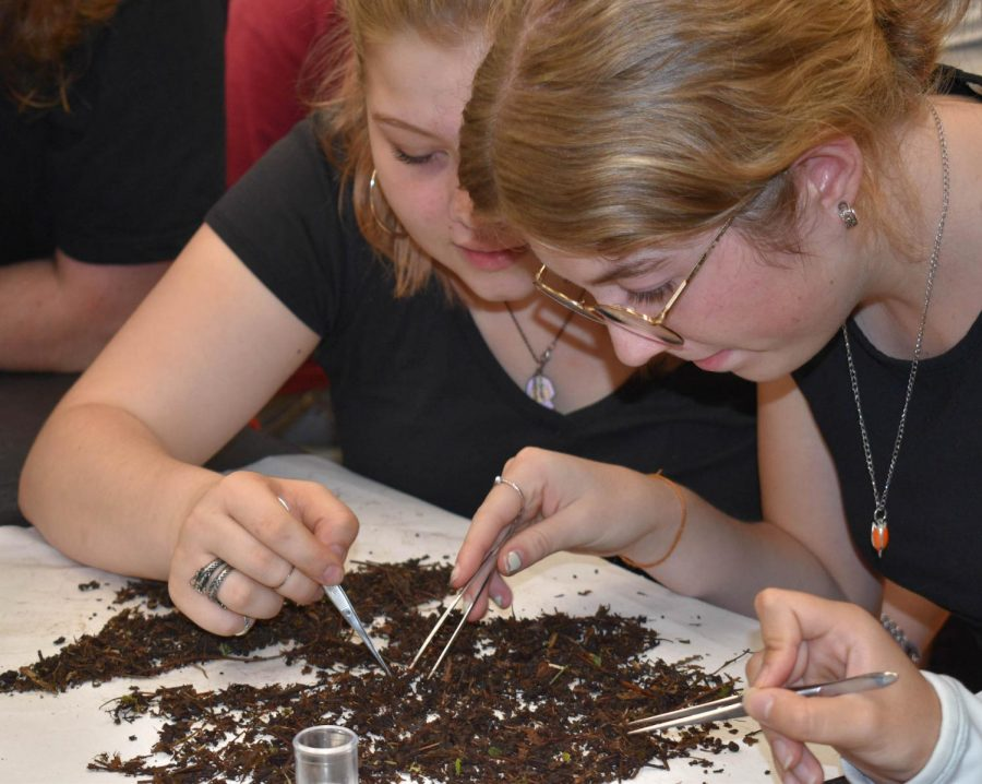 A biology class studies bugs and worms in dirt