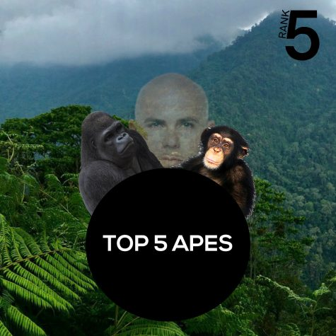 Rank5: Top 5 Apes