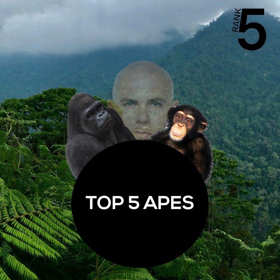 Rank5: Top 5 Apes